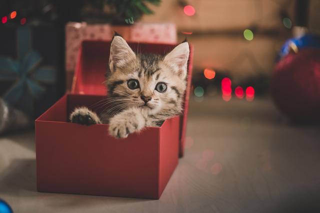 猫 箱に入る かわいい