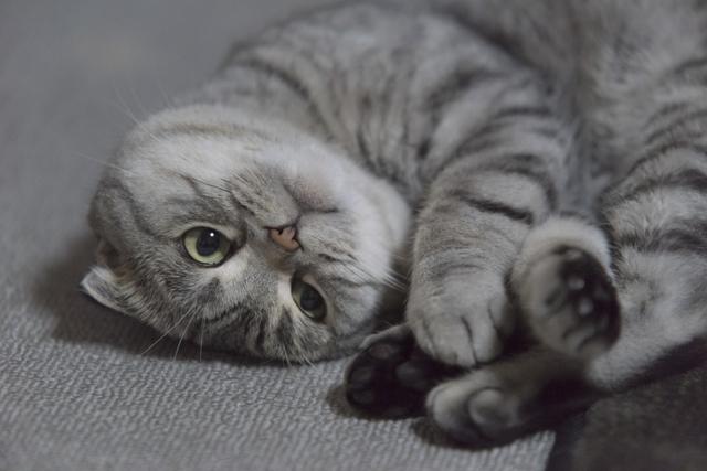 猫 猫風邪 原因