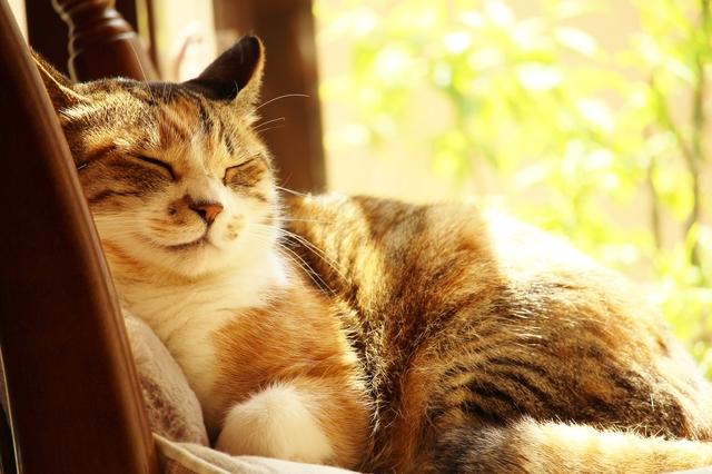 猫 快適な室温