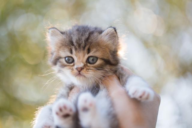 猫 抱っこ