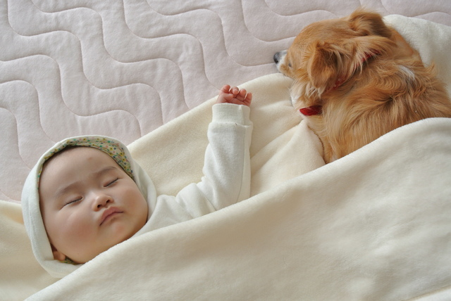 犬 飼い主 添い寝