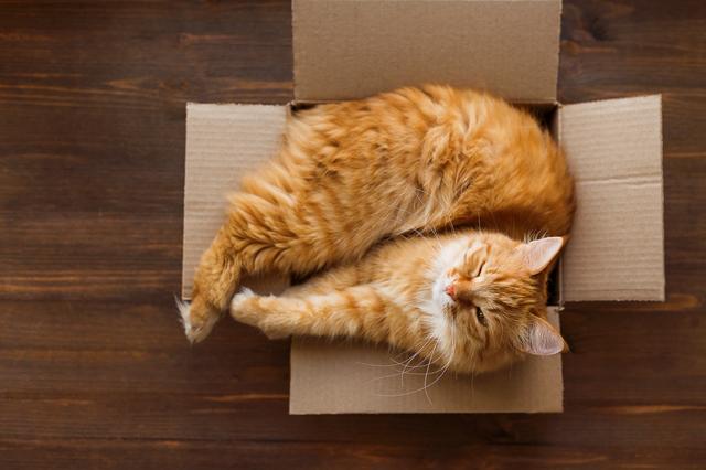 猫 箱 入る 理由