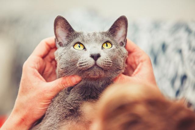 猫 マッサージ やり方