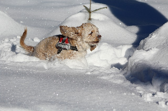 Dog in the snow 1483459 640
