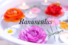 Ranunculus所属の大岡晴菜