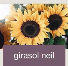 girasolnail所属のあか