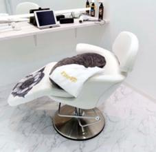 すぐ予約OK‼️髪質改善✨うるつや✨大人気‼️秋のカラー大好評‼️完全個室‼️赤坂徒歩1分‼️トータルビューティーミニモ限定¥500〜❤️