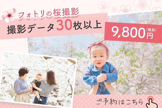 Sakura sp