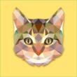 ozaki-cat尾崎貓