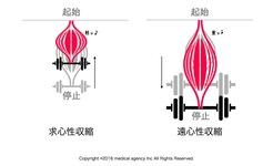 【イラスト付き】遠心性収縮・求心性収縮・等尺性収縮とエクササイズの生理学