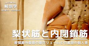【梨状筋と内閉鎖筋】股関節外旋筋の筋ボリュームと付着部の個人差
