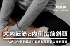 大内転筋と内側広筋斜頭 ~ 大腿の内側を構成する筋と股関節の機能障害 ~