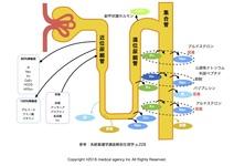 腎臓リハビリテーションを行う上で必要な生理学的知識