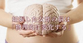 女性の脳は妊娠すると物理的にも変化する Nature Neuroscience誌