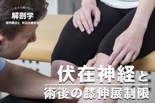 【伏在神経と術後の膝伸展制限】いまさら聞けない解剖学|町田志樹先生