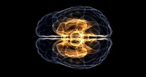 「安静時fMRI」は本当に有効?血液の流れとニューロンの関連性