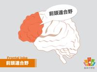 【苦手な脳を再勉強】前頭連合野をイラストで復習しよう!
