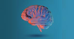 脳梗塞の炎症が収束するメカニズムが解明!
