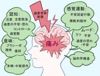 ユウタの腰の痛みの原因は、Nociceptive pain? 【慢性痛クリニカルリーズニング】