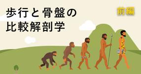 【サルからヒトへ】歩行と骨盤の比較解剖学 ~前編~