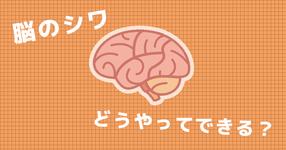 大脳皮質の表面に見られる「シワ」を作るために重要な神経細胞が解明