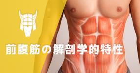 前腹筋の解剖学的特性 ~腹直筋・錐体筋~ |文京学院大学 教授 山﨑敦先生