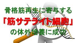 「筋サテライト細胞」の培養に成功|筋ジスなどの治療法確立に期待