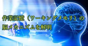 【最新研究】作業記憶(ワーキングメモリ)の脳メカニズムを解明