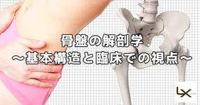 骨盤の解剖学  〜基本構造と臨床での視点〜