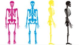 【完全商用フリー素材】自由に動かせる解剖画像ダウンロード