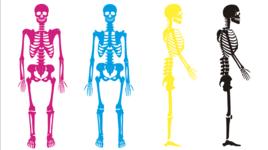 自由に動かせる解剖画像ダウンロード #2