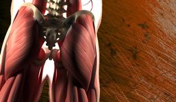 坐骨神経の走行異常