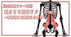 【完全商用フリー素材】動かせる筋肉シリーズver.2ー腸骨筋と大腰筋と小腰筋ー