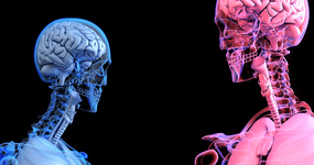 脳の性分化「臨界期」よりも前に決まっていた