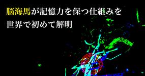 脳海馬が記憶力を保つ仕組みを世界で初めて解明|富山大学