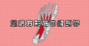 足底方形筋の解剖学講座