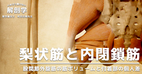 【1ヶ月基礎医学講座】2日目梨状筋