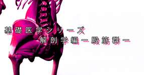 【SPOT Writer】基礎医学シリーズ解剖学編ー殿筋群ー