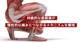 持続的な筋緊張が慢性的な痛みにつながるメカニズムを解明|名古屋大