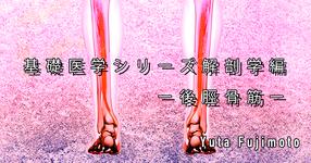 【SPOT Writer】基礎医学シリーズ解剖学編ー後脛骨筋ー