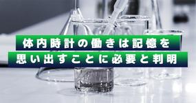 体内時計の働きは記憶を思い出すことに必要と判明|東京大学