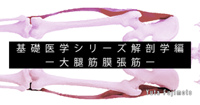 【SPOT Writer】基礎医学シリーズ解剖学編ー大腿筋膜張筋ー