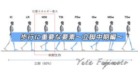 歩行に重要な要素〜立脚中期編〜
