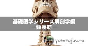 基礎医学シリーズ解剖学編―頸長筋―
