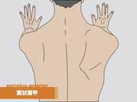 【イラスト】前鋸筋の起始・停止、支配神経から筋トレ