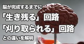【東京女子医科大学】脳が完成するまでに「生き残る」回路と「刈り込まれる」回路との違いを解明