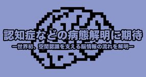 【大阪市立大学】認知症などの病態解明に期待ー世界初、空間認識を支える脳情報の流れを解明ー