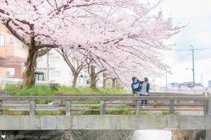 桜の下のカップル