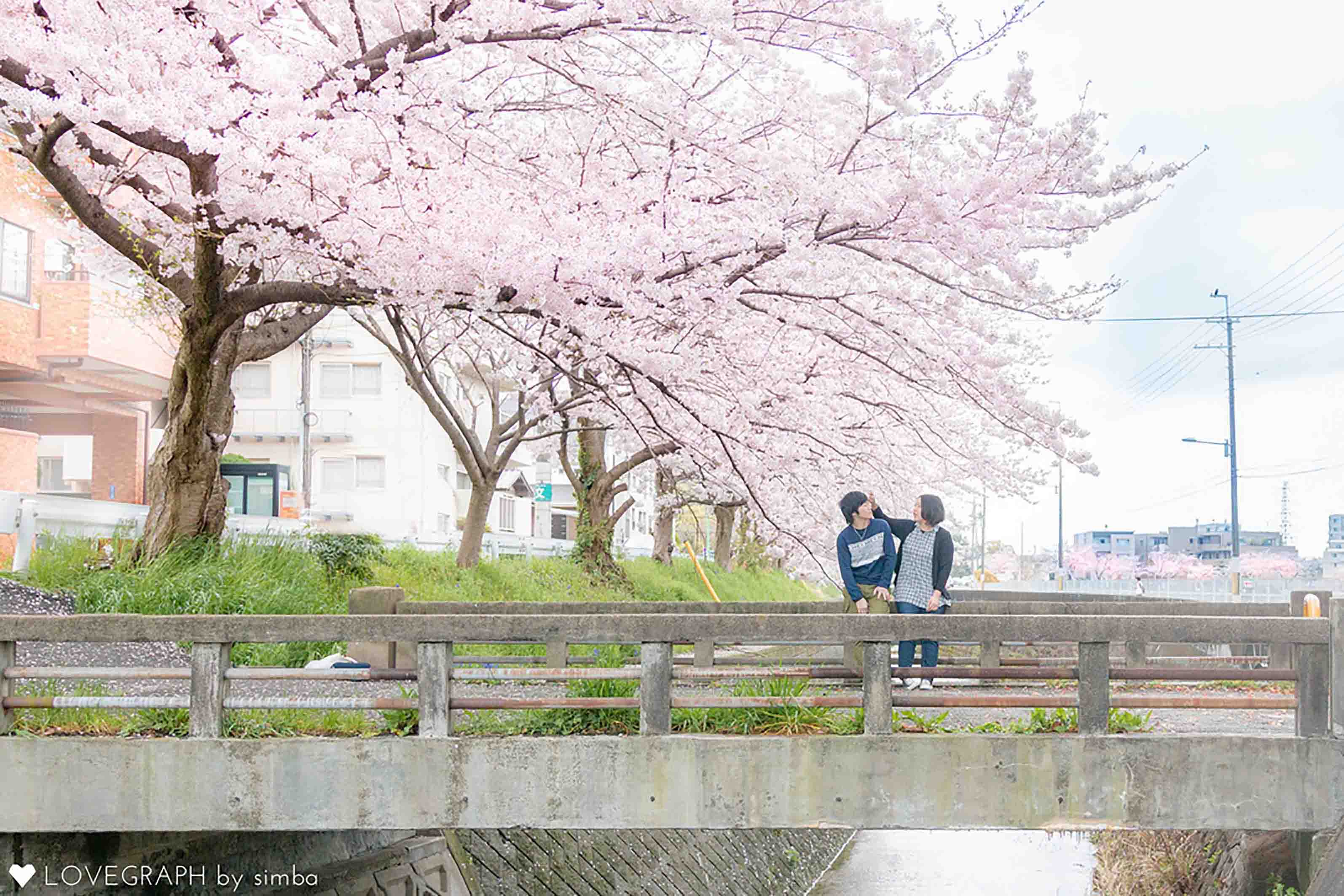 桜下のカップル