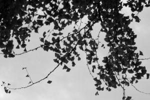 空と木_白黒